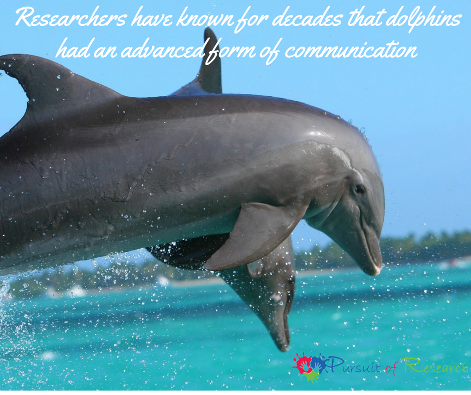 Researchers have known for decades that dolphins had an advanced form of communication
