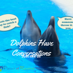 Dolphins have conversations 'Just like us'