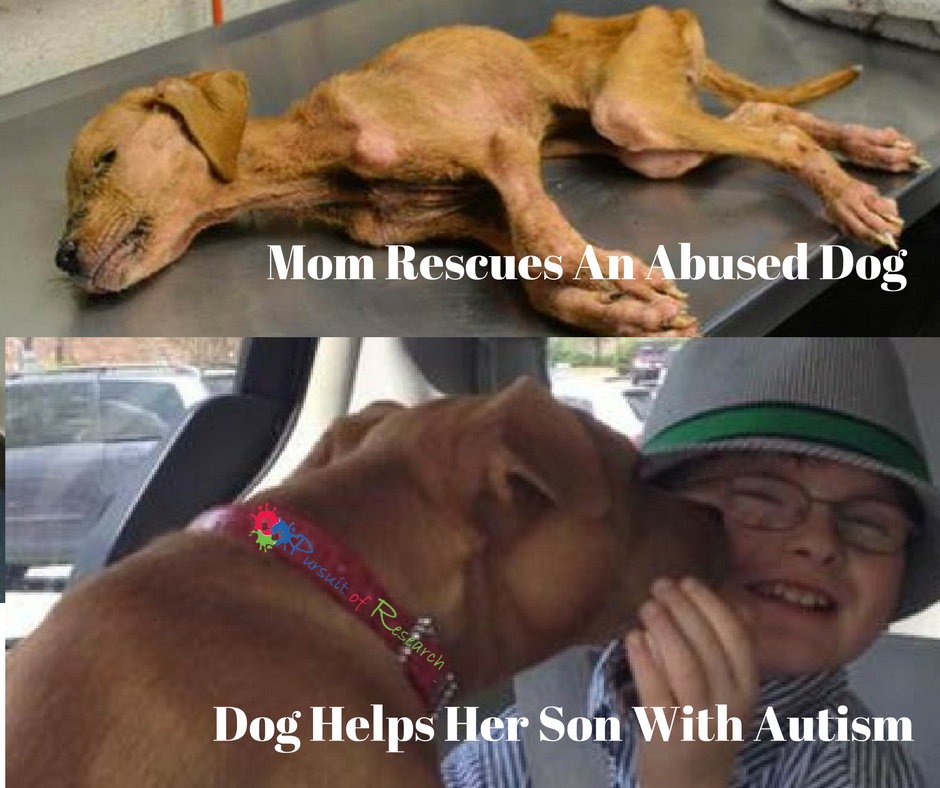 mom rescues dog, dog helps son